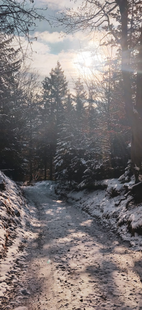 Wanderung, Österreich, Niederösterreich, Enzianhütte, Winter, Kieneck